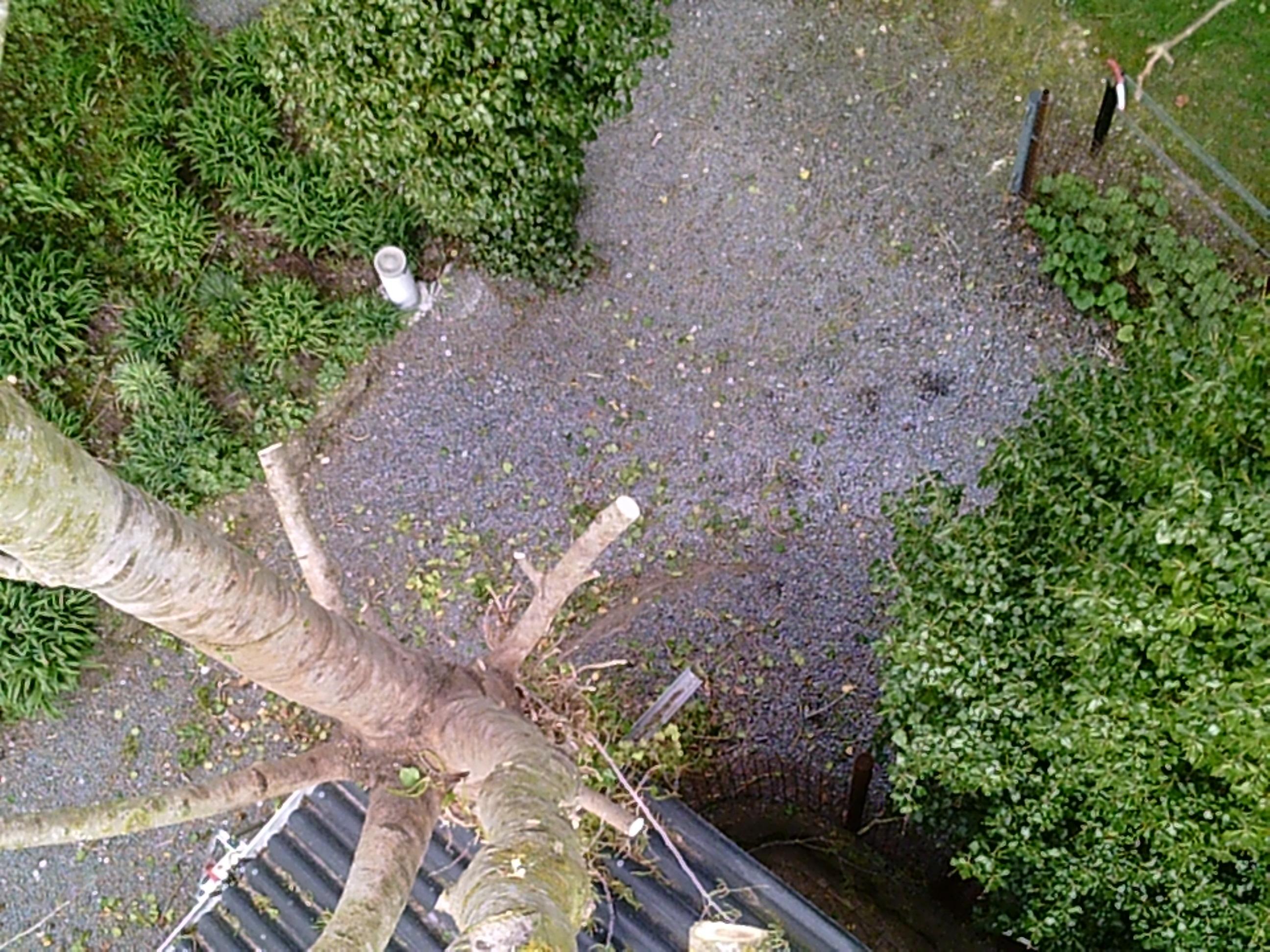 witte abeel